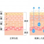 新時代の乾燥肌対策