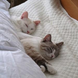 眠る直前にPC、携帯を触ってはいけない3つの理由